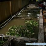 Phân loại nước thải sinh hoạt