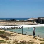 Nuôi tôm trên cát tại Quảng Trị: Hiểm họa về môi trường