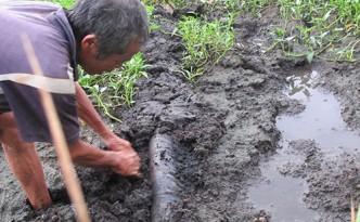 Cơ sở thuộc da chôn ống để xả lén nước thải